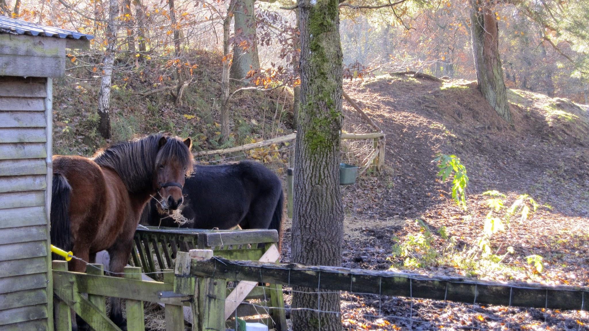 De to heste i bofællesskabet Nonbo Hede - Viborg